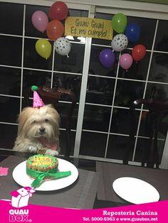 Shih Tzu, Queso, Akira, Ideas Para, Dog Food Recipes, Pets, Birthday, Dog Birthday Parties, Puppy Party