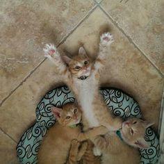 ¡Eres mío! No, ¡mío! #gatos #cats #Seresto #animales #mascotas #pets #amigos #friends #catfriendly #catlovers #amoamigato