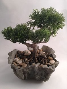 "Realistic artificial Bonsai plant in a hand carved driftwood textured concrete bowl. Dimensions of planter is 7"" wide x 9"" high. Concrete bowl is filled with polished river rock. We currently have 3 d"