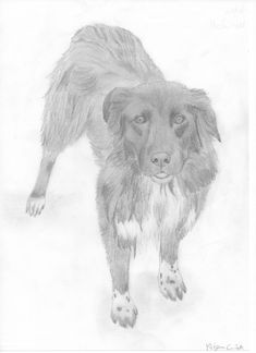 Ambra - Pencil drawing / Bleistiftzeichnung / Disegno a matita #dog #art #pencildrawing #drawing #zeichnung #disegno Moose Art, Lion Sculpture, Statue, Drawing, Animals, Good Photos, Photo Illustration, Children Drawing, Dogs