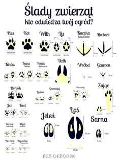 Polish Language, Love Is Comic, Music Education, Kids And Parenting, Good To Know, Biology, Kids Playing, Activities For Kids, Homeschool