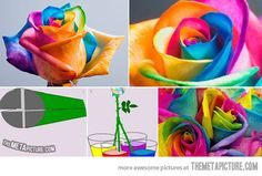 How to make colorful roses…