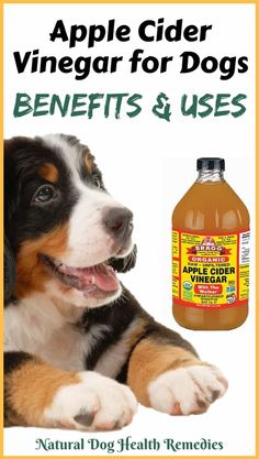 What are the benefits of apple cider vinegar for dogs? Is apple cider vinegar safe for dogs? How to use acv to treat various canine health problems, such as itchy paws and skin problems? Find out from this page. Fleas And Itchy Skin Apple Cider Vinegar Dogs, Apple Cider Vinegar Remedies, Apple Cider Vinegar Benefits, Apple Benefits, Dog Flea Remedies, Itching Remedies, Flea Remedy For Dogs, Itchy Dog Remedies, Fungi