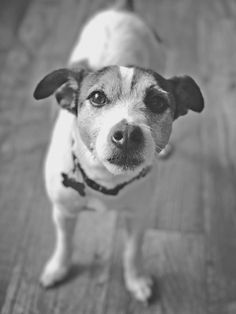 OMG! The Best Dog Ramps Ever - Caring for a Senior Dog