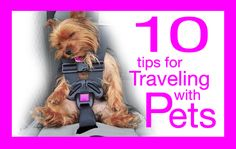 traveling with pets ideas tips