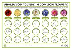 Aroma Chemistry - The Chemical Compounds Behind the Smell of Flowers | Compound Chem