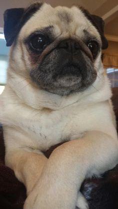 PugMug, of course!! pic.twitter.com/HFmCi1Ird5