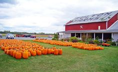 """""""Pumpkins are the epitome of fall. This patch is in rural Ohio."""" (From: 55 Incredibly Beautiful Photos of Fall)"""