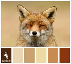 Fox Tones: Brown shades, Beige, Stone, Sand, Terracotta - Colour Inspiration Pallet