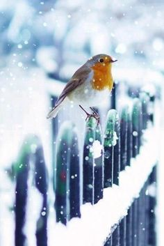 Good Morning Happy December More Le 3 décembre it snow ! Pretty Birds, Love Birds, Beautiful Birds, Animals Beautiful, Cute Animals, Snow Scenes, Winter Scenes, Animals Tattoo, Happy December