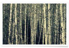 Birch - Robin Delean - Premium Poster
