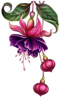 Drawing Flowers & Mandala in Ink - Drawing On Demand Art Floral, Botanical Flowers, Botanical Prints, Flower Prints, Flower Art, Watercolor Flowers, Watercolor Art, Drawing Flowers, Fuchsia Flower
