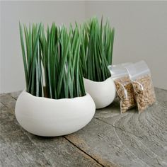 These porcelain egg planters come with wheatgrass seeds. They're stylish and healthy.
