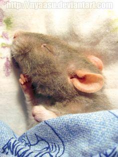 Sleepy-head by Nyaasu.deviantart.com