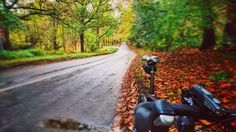 Love riding these roads. Autumn is stunning.  #AATR #allabouttheride #cycling #bicycling #cyclinglife #roadcycling #sundayride #fromwhereiride #Norfolk #cycletography #sonyimages #Xperia #snapseed #Autumn #autumncolors #countrylanes
