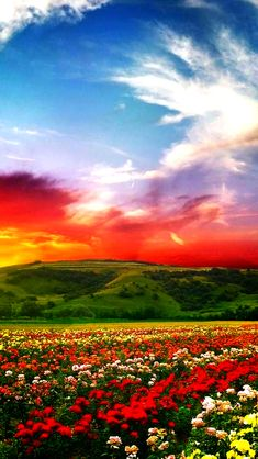 Beautiful color landscaped and sunset