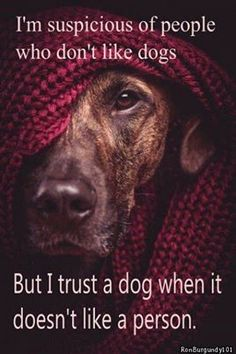 Funny how I find it odd/suspicious for someone to not like dogs, but when a dog doesn't like someone I completely trust the dog's instincts.