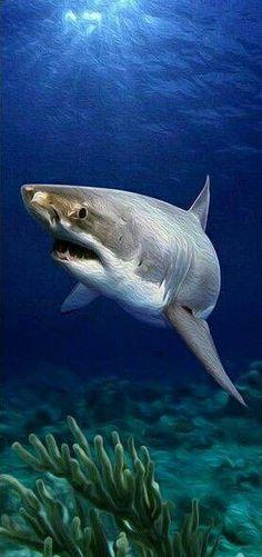sea life - sea life photography - sea life underwater - sea life artwork - sea life watercolor sea l Underwater Creatures, Underwater Life, Ocean Creatures, Orcas, Shark Painting, Save The Sharks, Shark Pictures, Shark Art, Delphine