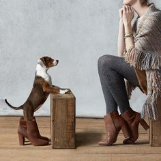 Anthro Blog - dogs and fashion