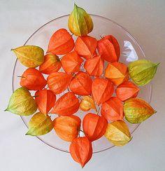 оранжевая посуда - Поиск в Google