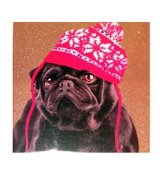 Pug blank cards at www.ilovepugs.co.uk post worldwide