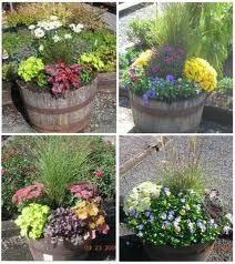 ornamental grasses in pots - Google Search
