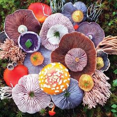 Colourful Mushrooms by @jill_bliss