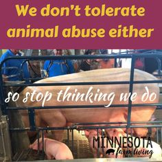 Unfortunately, animal abuse happens. But realize, those incidents are by far the exception, not the rule. Farmers care for their animals and do not tolerate animal abuse. American Agriculture, Animal Agriculture, All About Animals, Stop Thinking, Farms Living, Farm Life, Farmers, Pet Care, Education