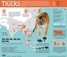 """Siberian Tiger Quest - Tigers at the Tipping Point: tigers are among the most recognizable and beloved animals on the planet, and also among the most at-risk. In 1900, an estimated 1000,000 wild tigers roamed the globe. Now only an estimated 3,200 exist in the wild. Scientists say that tigers are at a """"tipping point""""—unless significant protections are put in place, these big cats could soon face extinction. This infographic looks at current tiger numbers and why the big cats are on the…"""