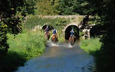There is a wealth of family friendly activities and things to do in Tipperary in Ireland's Ancient East From castles to bike parks, equine adventures to fun on the water. Trail Riding, Horse Riding, Stuff To Do, Things To Do, Stud Farm, Riding Lessons, Bike Parking, Stables, Cross Country