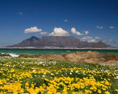 Photo Table Mountain in Cape Town - Pictures and Images of Cape Town - - Autore: Robert Bale Port Elizabeth, Monte Meru, Tanzania, Table Mountain Cape Town, Safari, South Afrika, Africa Destinations, Le Cap, Garden Route