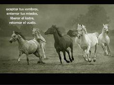 caballos-y-frases-3-638.jpg?cb ...