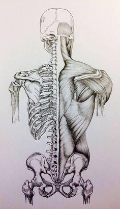 Anatomy Drawing Medical Skull to Pelvis Back Bones/Muscles by BillyDoubleU Human Anatomy Drawing, Human Figure Drawing, Human Anatomy For Artists, Medical Drawings, Medical Art, Anatomy Sketches, Art Drawings Sketches, Hair Drawings, Drawing Hair