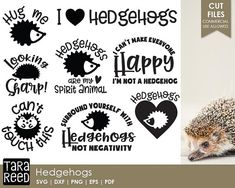 Hedgehog svg bundle / Hedgehogs svg / Hedgehog sayings svg / Hedgehog quotes svg / svg files / svg for Cricut / svg for Silhouette Tara Reed, Meant To Be Quotes, Cartoon Clip, Character Quotes, Ariel The Little Mermaid, Svg Files For Cricut, Cricut Vinyl, Vinyl Decals, Sticker