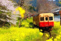 """春だけにしか出会えないから。日本全国の美しすぎる""""花の絶景""""5選   RETRIP[リトリップ]"""