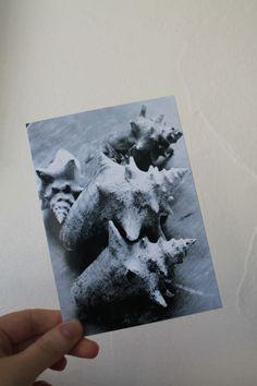 """Carte postale """"les lambis"""" en noir et blanc : Cartes par le-petit-bazar-des-trinomettes-en-delire"""