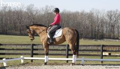 Tips for teaching a horse who is heavy on his forehand to engage his hindquarters.