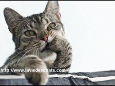 conseil santé animaux domestique