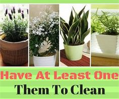 These Plants Are Oxygen Bombs – Have At Least One Of Them To Clean The Air At Your Home | Green Healthy World