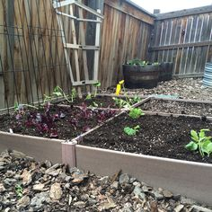 "My garden space that allows for a good amount of veggies to be grown without taking up a lot of actual ""space""."