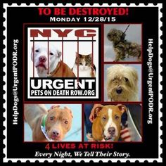 4 DOGS ON DEATH ROW NEED OUR HELP* TO BE DESTROYED MON. DEC.... - Care2 News Network