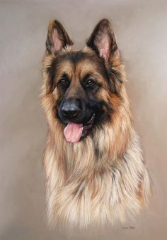 Pastel portrait painting on paper (24 X 18) of a German Shepherd by Lisa Ober.