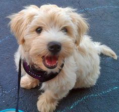 Get out of here, this Yorkie-Poo is too freakin' cute!
