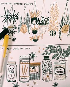 Abigail Halpin's sketchbook -- hanging plants and spices illustrations