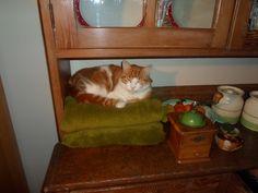 Raoul reclining!