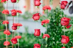 red rose hanging backdrop
