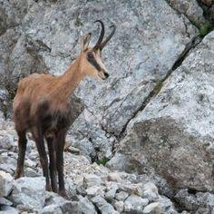 Piatra Craului National Park Utila, Visit Romania, Natural Park, National Parks, English, English Language
