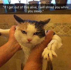 Funny Animal Pictures Of The Day - 10 Images