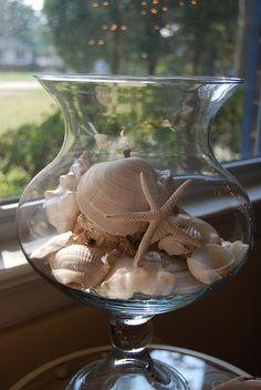 A way to display beautiful sea shells...........