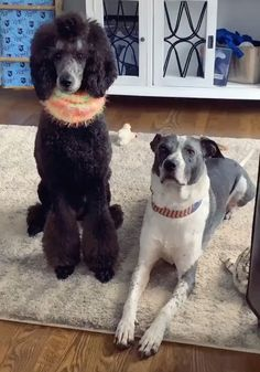 Cute Funny Dogs, Silly Dogs, Funny Cats And Dogs, Cute Funny Animals, Cute Baby Animals, Animals And Pets, Funny Animal Videos, Funny Animal Pictures, Animal Memes